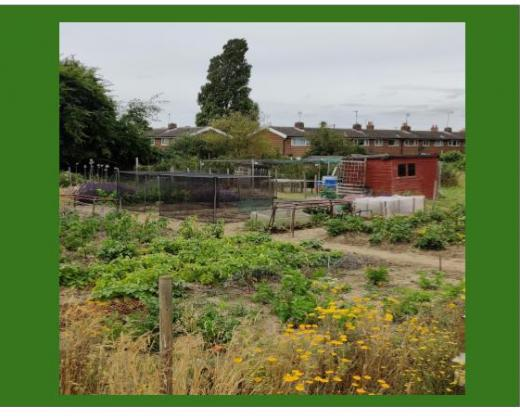 link to Allotments